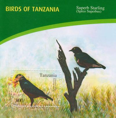 Birds of Tanzania - Superb Starling