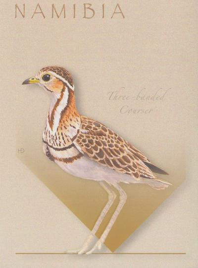 Three Banded Courser