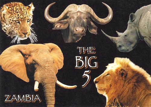 The Big Five: Lion, Elephant, Water Buffalo, Lioness, Rhinoceros